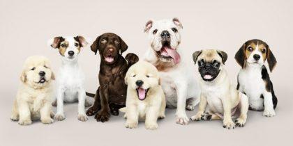 Shopping Maia: Consulta veterinária, banho e tosa com 20% de desconto!
