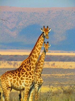 Cupom de 10% OFF em passagens para África do Sul no site da Almundo