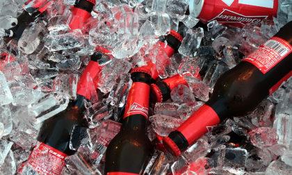 Balde de Budweiser! (12 unidades)