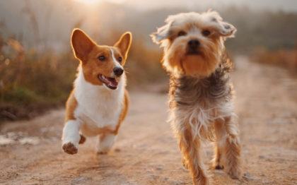 Pan: Desconto cumulativo de 12% em TODO o site da Royal Pets!